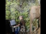 Британский пианист играет классическую музыку для больных слонов