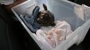 7-летняя красноухая черепаха не может отложить яйца. Часть 4 / A 7-year-old red-eared slider cannot lay eggs. Part 4