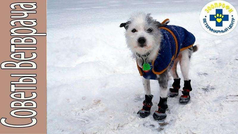 Как защитить лапки нашим собакам от реагентов?