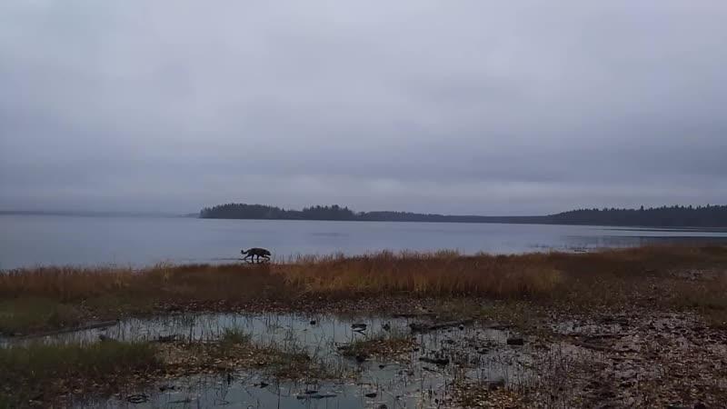 Озеро Кудамгубское, в него заходит река Суна на своем пути.