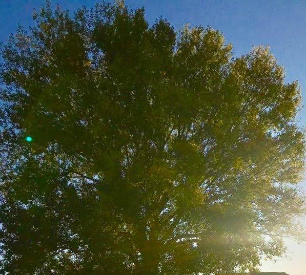 Консуэло Моран  мэр, который зарабатывает всего шесть евро и отдаёт их на посадку деревьев