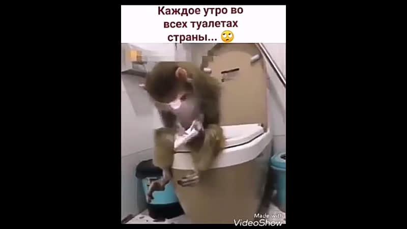 Утро в туалетах