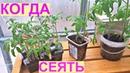 СУПЕР РАННИЙ УРОЖАЙ томатов Когда сеять на рассаду