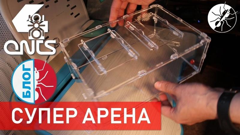 СУПЕР АРЕНА для муравьев! ВАЖНЫЕ НОВОСТИ! » Freewka.com - Смотреть онлайн в хорощем качестве