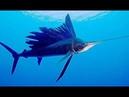 Морские глубины (Документальные фильмы)