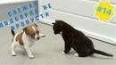 Приколы про животных Смешное видео про котов, собак и не только Такого Вы еще не видели! Выпуск 14