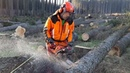 Only the Husqvarna 560 XP chainsaw has the charm , Felling the whole forest!