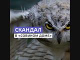 Зоозащитники требуют закрыть антикафе с совами