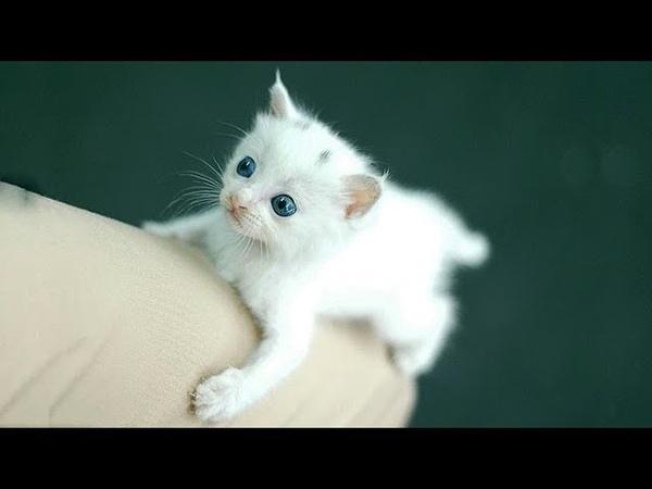 「かわいい猫」 笑わないようにしようとしてください 最も面白い猫の 2