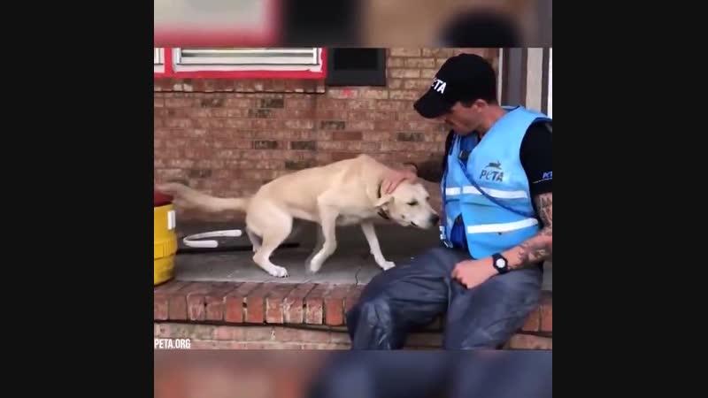Спасение животных после наводнения которых оставили хозяева