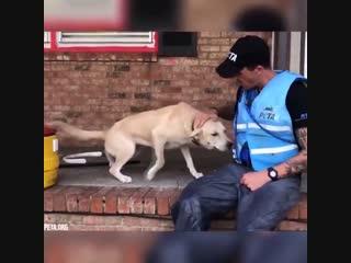Спасение животных после наводнения, которых оставили хозяева.