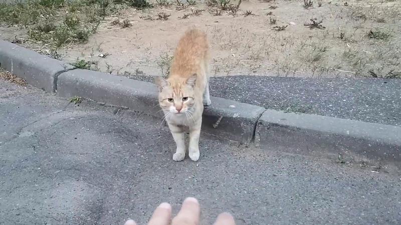 Кошка живущая под балконом хотела общаться со мною