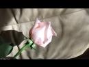 Розовые розы Любке Кузнецовой))