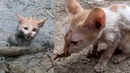 Rescue kitten stuck in mud at pond and give food - Cat rescue by man