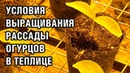УСЛОВИЯ ВЫРАЩИВАНИЯ РАССАДЫ ОГУРЦОВ В ТЕПЛИЦЕ 30-11-2018