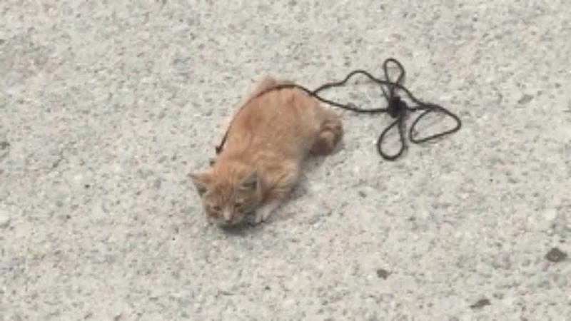 🔴По тротуару полз котёнок с перевязанной шнурком шеей…
