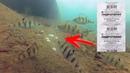ГИДРОПЕРИТ ТВОРИТ ЧУДЕСА ПЕРЕКИСЬ ВОДОРОДА В ДЕЙСТВИИ! Подводная съемка Рыбалка весной 2018