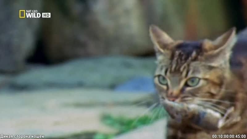 Дикая сторона кошек (2012)