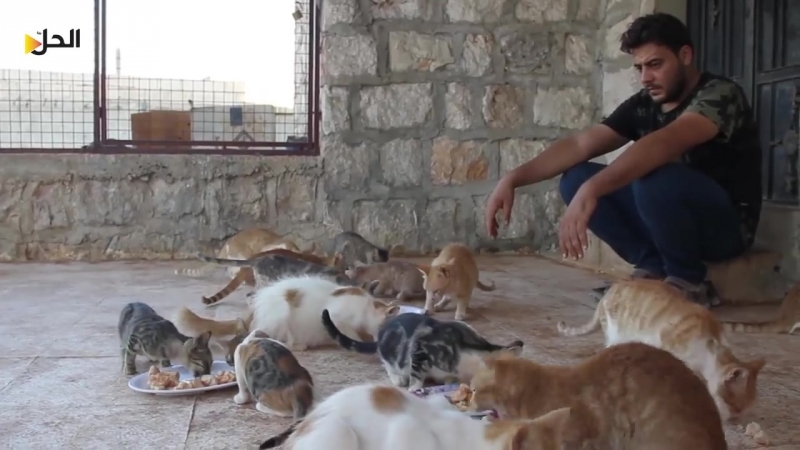 Убежище для животных Shelter of Hope в Идлибе, Сирия. Многие из них бездомны или ранены из-за войны.