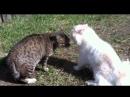 Коты матерятся!