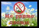 Новак Александр - Не рвите цветы