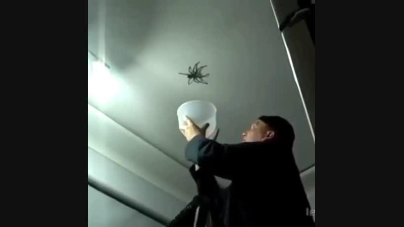 Я конечно боюсь пауков но это слишком смешно Нарыдалась от смеха