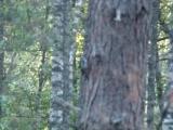 В пяти метрах от бесстрашного дятла