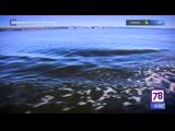 Подводный роман. Артефакты. 19.04.19