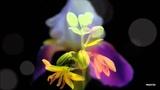 My Petite Fleur ( Oscar Benton )