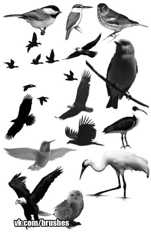 Птицы.abr