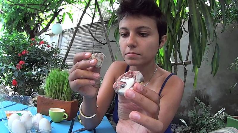 Утиное яйцо с зародышем (Duck Embryo Egg, Ho Chi Minh city, Vietnam)