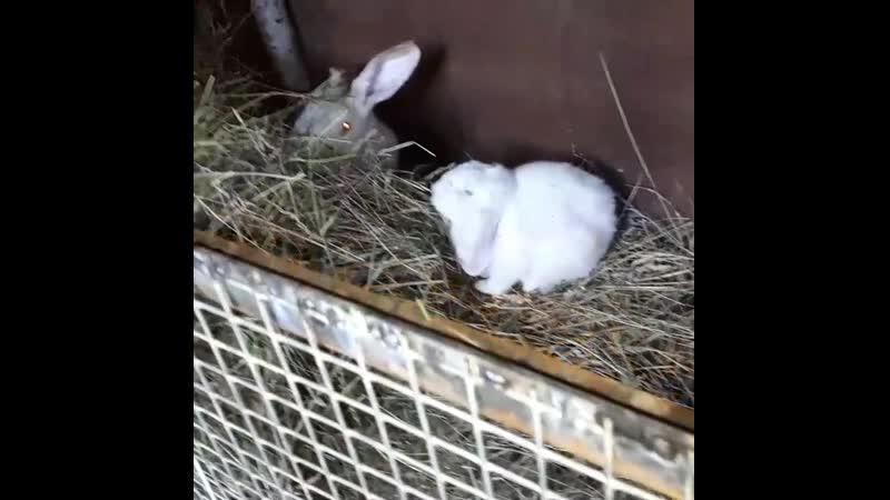 Продажа🐰🐇💰 кроликов различных пород,аренда на фотосьемку📸📹🎥, аренда самцов🐇на вязку👯♂️👯♀️💏❤💋💌, 🐇🐇🐇🐇🐰🐰🐰🐰 89648506666