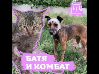 Кот батя забрал всю боль пса комбата и ушел на радугу