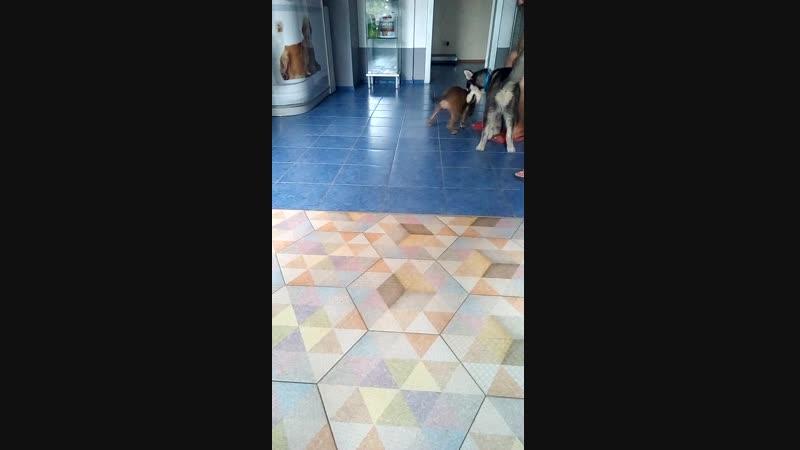 Самая первая встреча с собакой