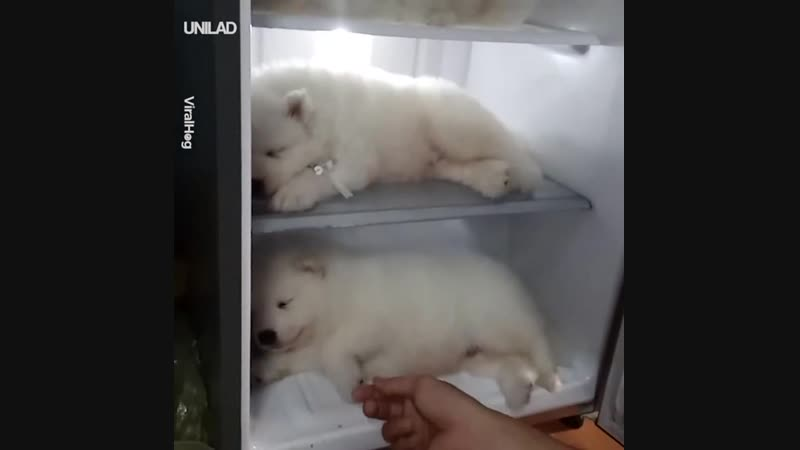 Инкубатор медведей