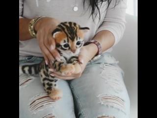 Елена Федоряк — Валяный котик