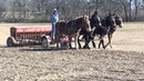 Mules Sowing Oats in Tennessee