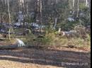 Коты Нафаня и Тотоша в лесу.