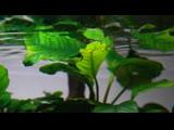 Betta fish jungle aquascape | Betta Planted Aquarium