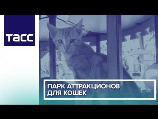 Парк аттракционов для кошек