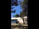Swinging activity in Heybeliada🙌🏼