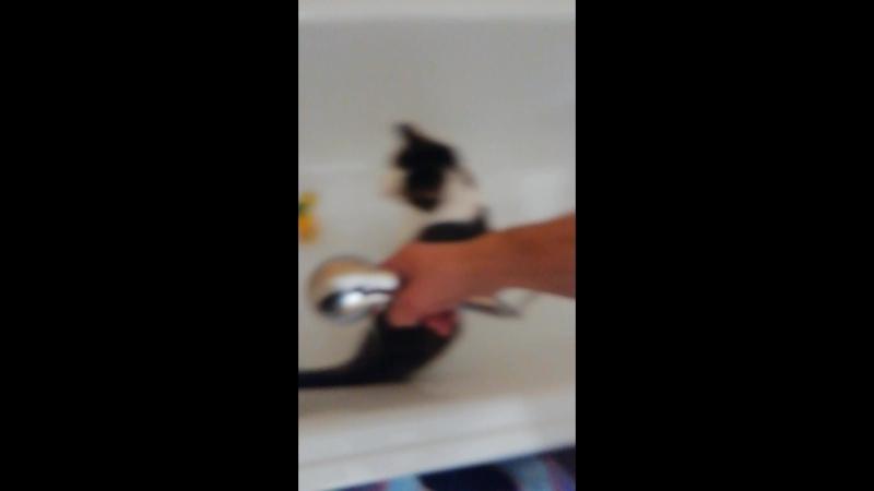 Тимуля любит мыться