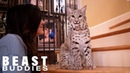 We Share Our Home With Two Bobcats | BEAST BUDDIES