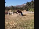 Веселые лошадки