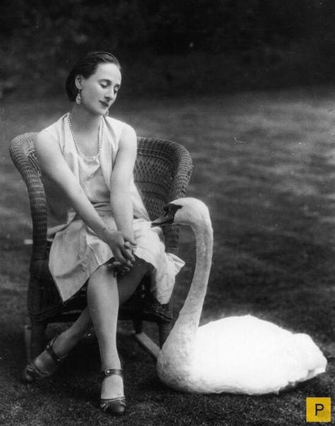 интересные факты из жизни великой балерины анны павловой она была одной из величайших балерин всех времен. она была первой, кто когда-либо совершил мировое турне с собственной труппой, чтобы показать балет людям, которые даже никогда не слышали о