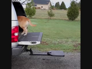 Portable dog ramp for SUVs and trucks