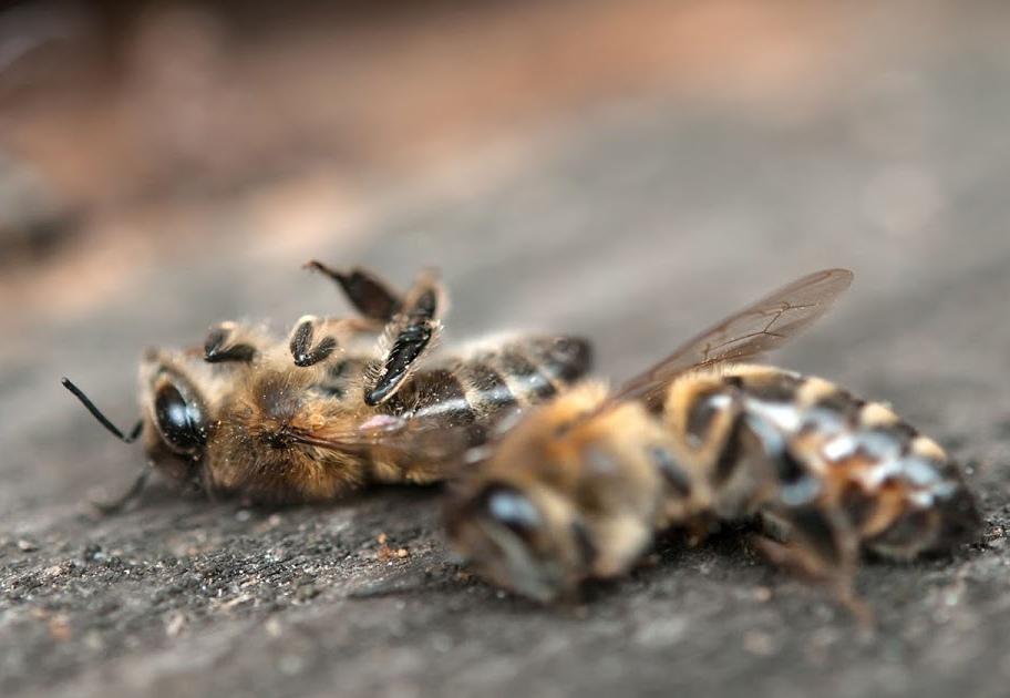 Обнародованы первые результаты экспертиз по гибели пчёл в Курской области