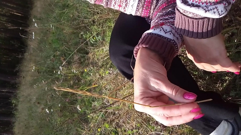 Пырей, волшебная трава