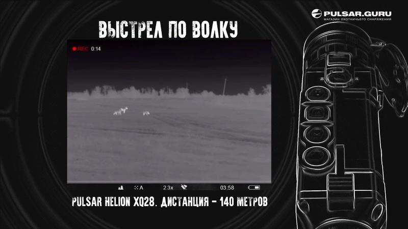 Выстрел по волку через тепловизор Pulsar Helion