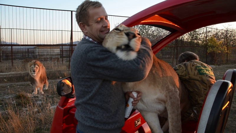 Львица Лола обнимает Оксану Олеговну и Олега Алексеевича